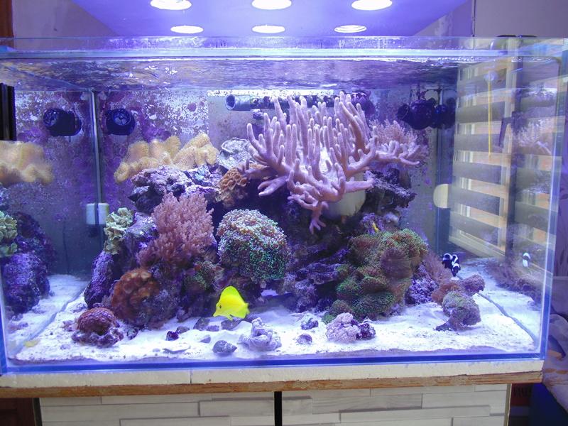 mon nouvel aquarium  - Page 7 Dsc07811