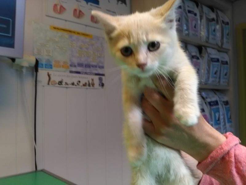 MIA, chatonne couleur beige, née le 9/03/2016 Mia11