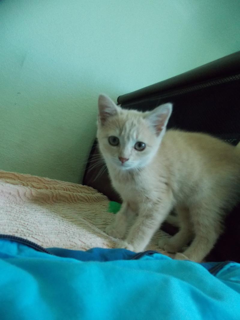 MIA, chatonne couleur beige, née le 9/03/2016 Mia_0110