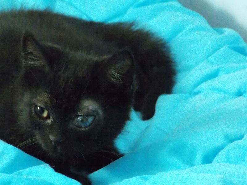 milord - Milord, chaton noir né le 01/05/2016 Milord19