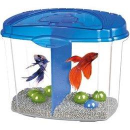 Aquarium Bizarre !  13184910
