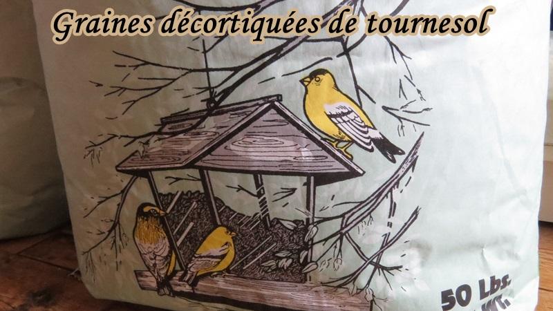 Chardonnerets jaunes heureux info sur graines  Graine12