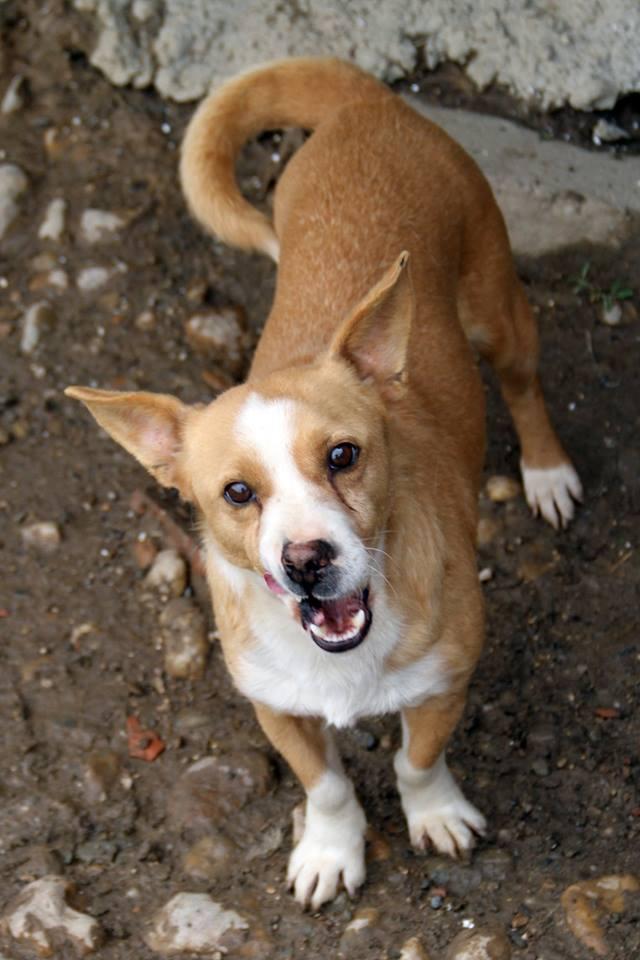 Parrainage tests sanguins et pensions refuge de Backa  et chiens prêts à partir sans solution - Page 3 Paddy_10