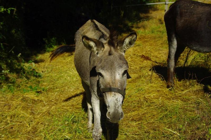 ADELE - ONC âne née en 2009 - décédée avant son adoption, en février 2017 13708410