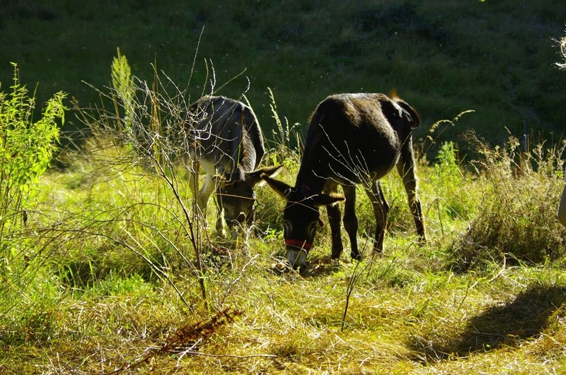 ERNESTINE - ONC âne née en 2011 - adoptée en février 2017 par Cécile 13738110