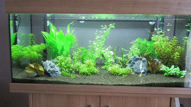 nouvelle version de mon aqua 180 Litres - Page 3 Img_0510