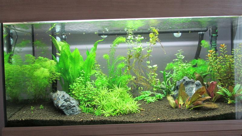 nouvelle version de mon aqua 180 Litres - Page 3 Img_0613