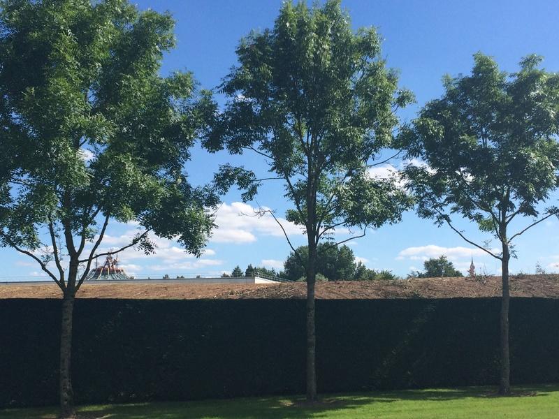 Déboisement du merlon au Nord du Parc Disneyland Img_2911