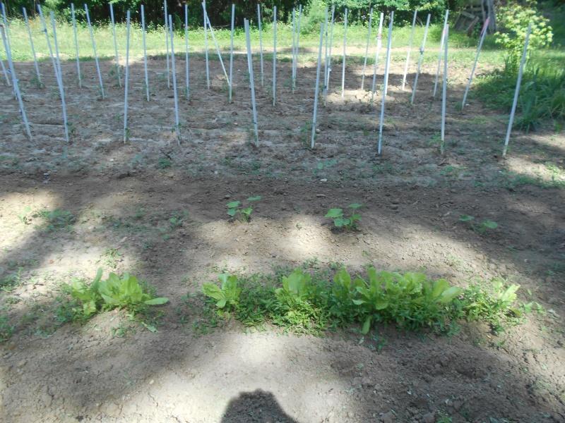 How does your Garden Grow  Garden15