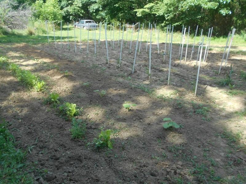 How does your Garden Grow  Garden16