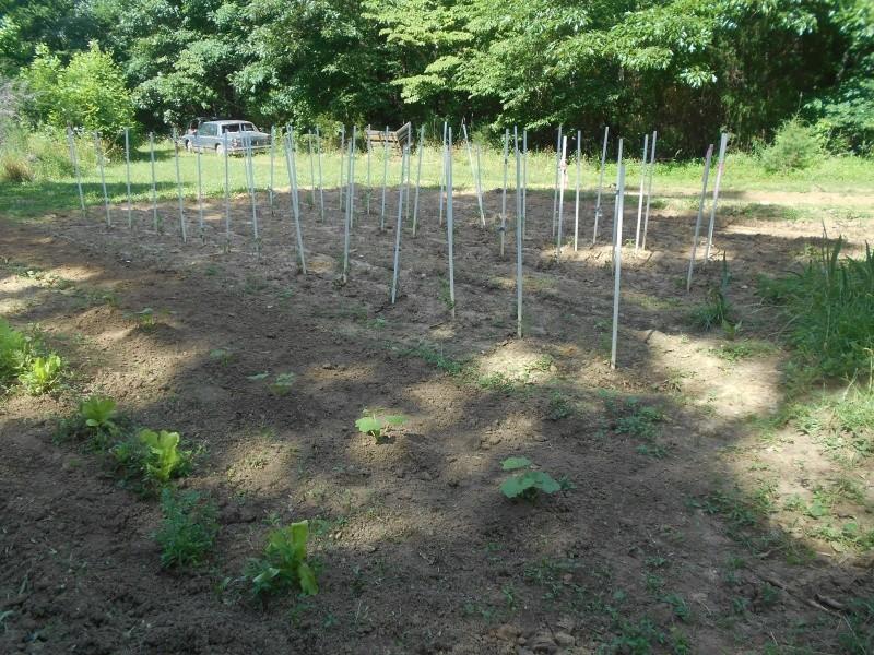How does your Garden Grow  Garden17