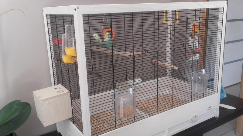 ma perruche femelle mange sa cage en bois!!!!  20160811