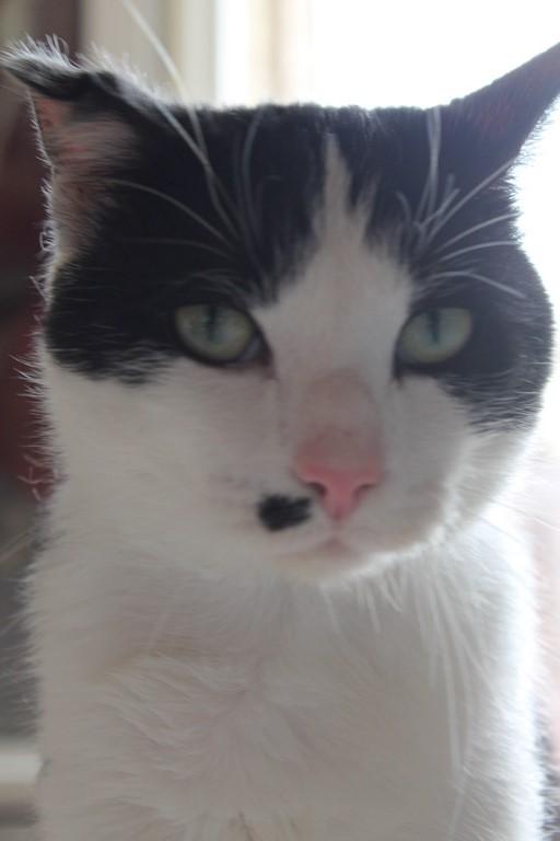 Michoko - Noir et blanc né en Mai 2012 URGENT !!! Img_0117