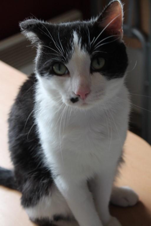 Michoko - Noir et blanc né en Mai 2012 URGENT !!! Img_0118