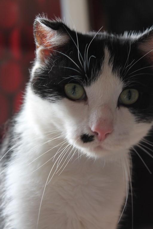 Michoko - Noir et blanc né en Mai 2012 URGENT !!! Img_0125