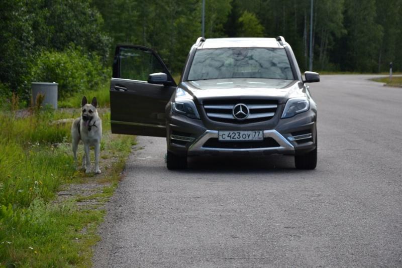 "SCANDINFVIAN SUMMER ""DOG SHOW СACIB CAC""  ""MOHOPORODNAY VEO""Чемпион Швеции Dsc_4312"