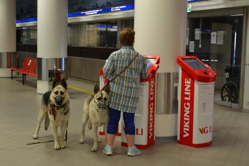 "SCANDINFVIAN SUMMER ""DOG SHOW СACIB CAC""  ""MOHOPORODNAY VEO""Чемпион Швеции Dsc_4315"
