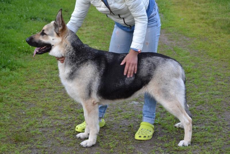 "SCANDINFVIAN SUMMER ""DOG SHOW СACIB CAC""  ""MOHOPORODNAY VEO""Чемпион Швеции Dsc_4614"