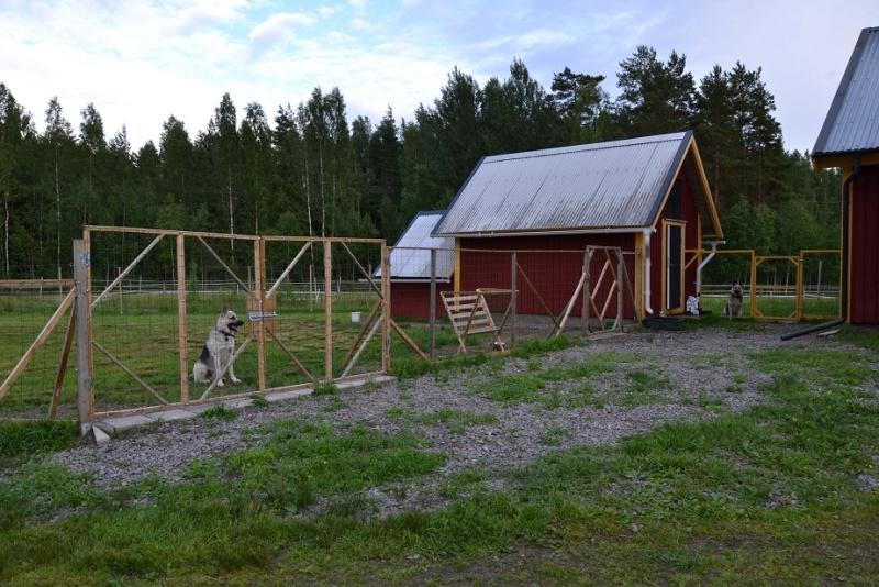 "SCANDINFVIAN SUMMER ""DOG SHOW СACIB CAC""  ""MOHOPORODNAY VEO""Чемпион Швеции Dsc_4615"
