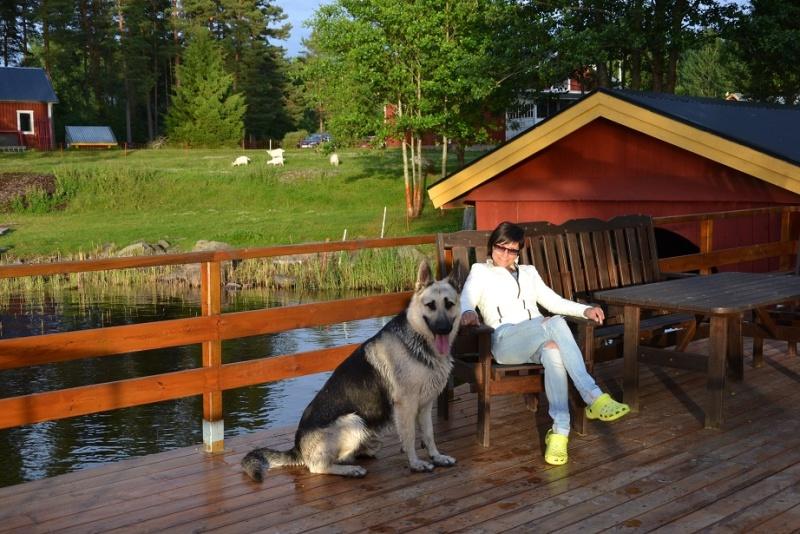 "SCANDINFVIAN SUMMER ""DOG SHOW СACIB CAC""  ""MOHOPORODNAY VEO""Чемпион Швеции Dsc_4616"