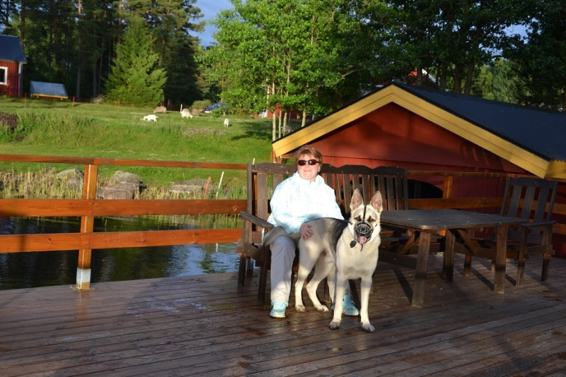 "SCANDINFVIAN SUMMER ""DOG SHOW СACIB CAC""  ""MOHOPORODNAY VEO""Чемпион Швеции Dsc_4617"