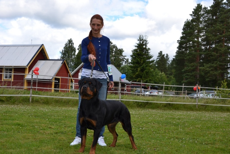 "SCANDINFVIAN SUMMER ""DOG SHOW СACIB CAC""  ""MOHOPORODNAY VEO""Чемпион Швеции Dsc_4713"