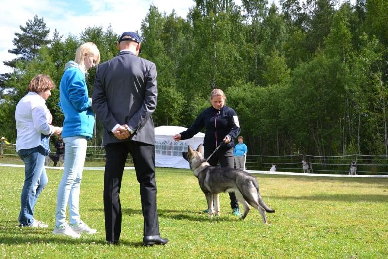 "SCANDINFVIAN SUMMER ""DOG SHOW СACIB CAC""  ""MOHOPORODNAY VEO""Чемпион Швеции Dsc_4716"