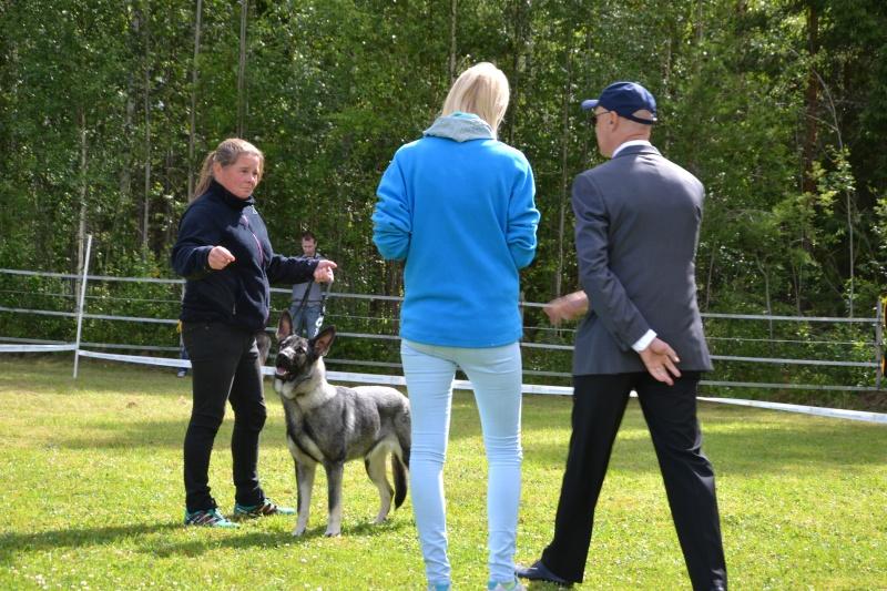 "SCANDINFVIAN SUMMER ""DOG SHOW СACIB CAC""  ""MOHOPORODNAY VEO""Чемпион Швеции Dsc_4810"