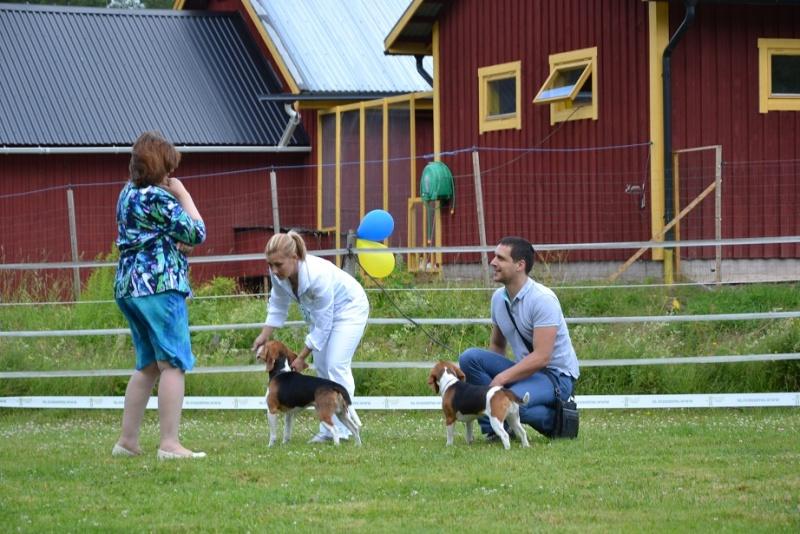 "SCANDINFVIAN SUMMER ""DOG SHOW СACIB CAC""  ""MOHOPORODNAY VEO""Чемпион Швеции Dsc_4811"