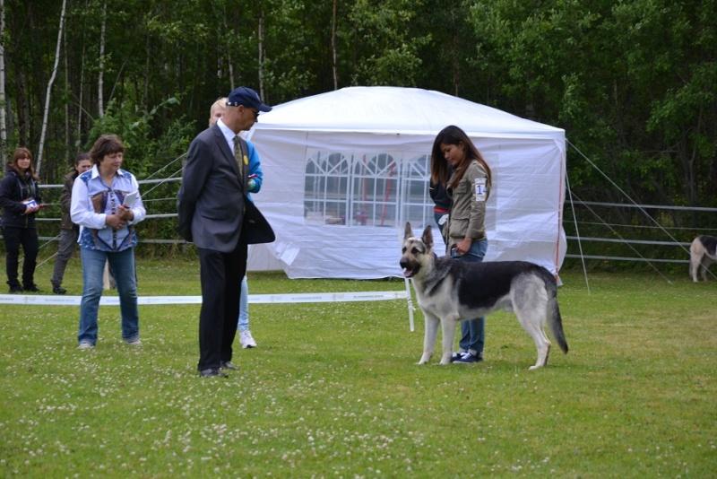 "SCANDINFVIAN SUMMER ""DOG SHOW СACIB CAC""  ""MOHOPORODNAY VEO""Чемпион Швеции Dsc_4813"