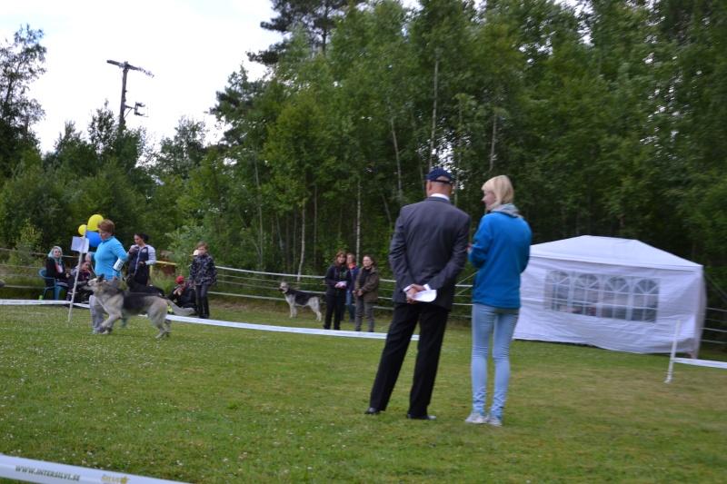 "SCANDINFVIAN SUMMER ""DOG SHOW СACIB CAC""  ""MOHOPORODNAY VEO""Чемпион Швеции Dsc_4814"