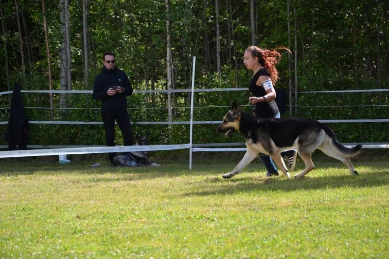 "SCANDINFVIAN SUMMER ""DOG SHOW СACIB CAC""  ""MOHOPORODNAY VEO""Чемпион Швеции Dsc_4815"
