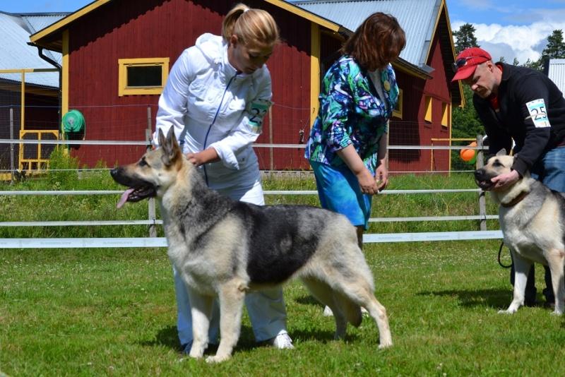"SCANDINFVIAN SUMMER ""DOG SHOW СACIB CAC""  ""MOHOPORODNAY VEO""Чемпион Швеции Dsc_5511"