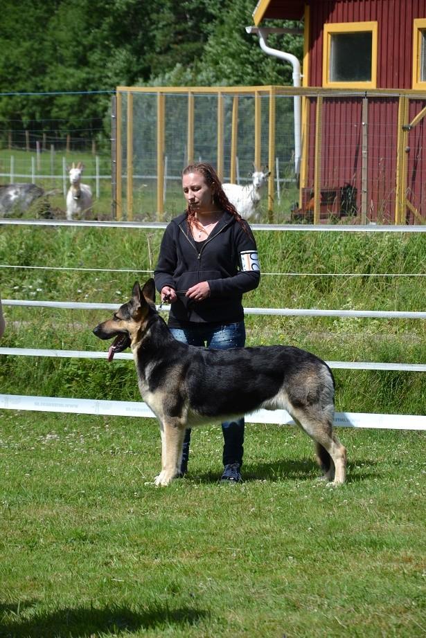 "SCANDINFVIAN SUMMER ""DOG SHOW СACIB CAC""  ""MOHOPORODNAY VEO""Чемпион Швеции Dsc_5517"