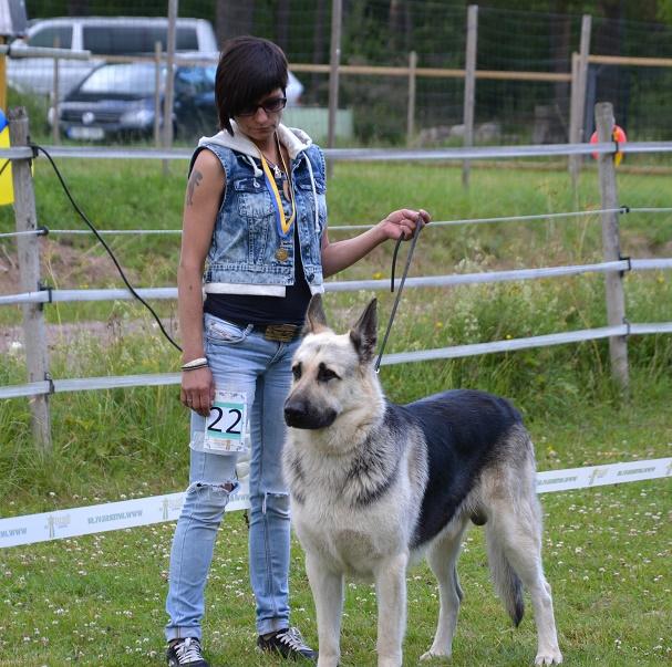 "SCANDINFVIAN SUMMER ""DOG SHOW СACIB CAC""  ""MOHOPORODNAY VEO""Чемпион Швеции Dsc_5518"