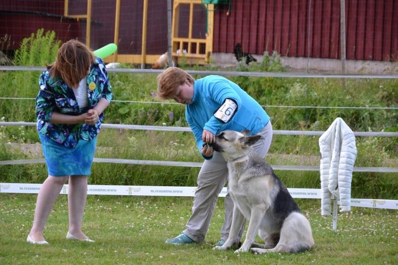 "SCANDINFVIAN SUMMER ""DOG SHOW СACIB CAC""  ""MOHOPORODNAY VEO""Чемпион Швеции Dsc_5519"