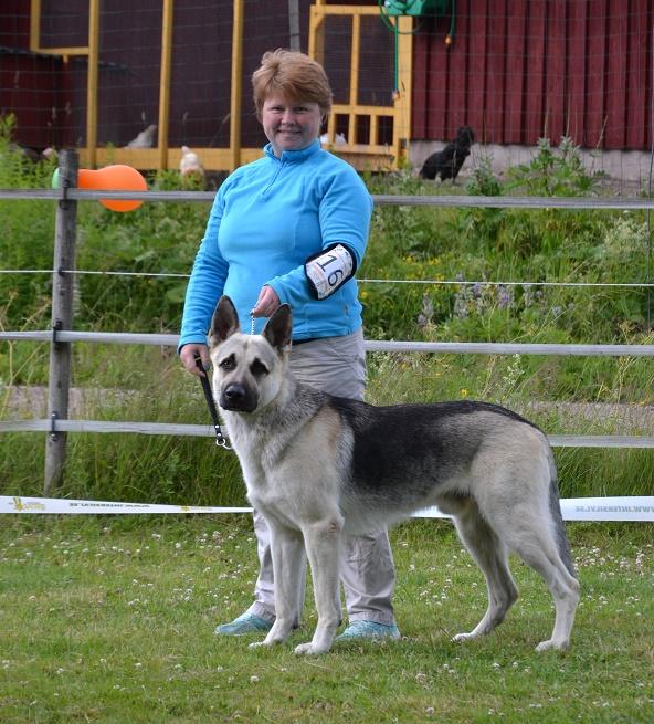 "SCANDINFVIAN SUMMER ""DOG SHOW СACIB CAC""  ""MOHOPORODNAY VEO""Чемпион Швеции Dsc_5610"