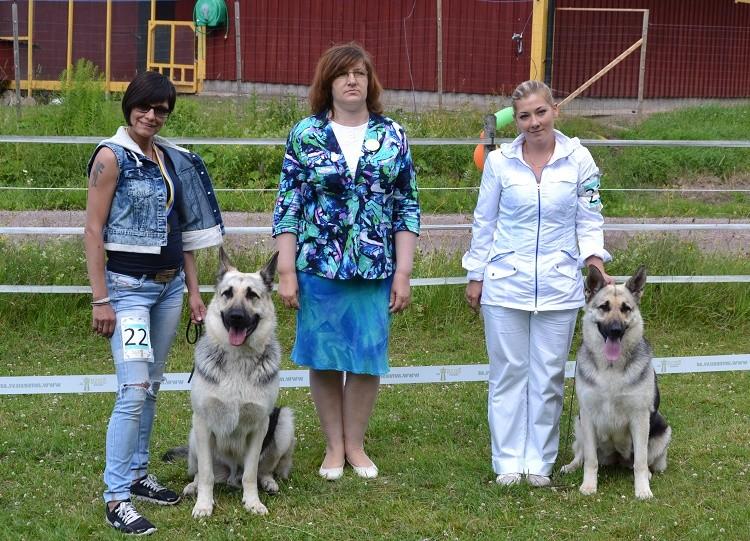 "SCANDINFVIAN SUMMER ""DOG SHOW СACIB CAC""  ""MOHOPORODNAY VEO""Чемпион Швеции Dsc_5611"