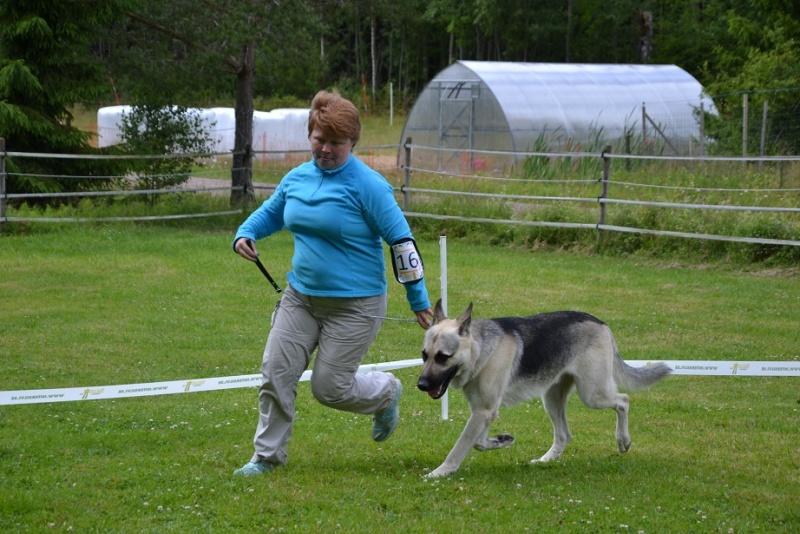 "SCANDINFVIAN SUMMER ""DOG SHOW СACIB CAC""  ""MOHOPORODNAY VEO""Чемпион Швеции Dsc_5614"