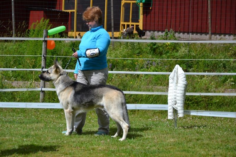 "SCANDINFVIAN SUMMER ""DOG SHOW СACIB CAC""  ""MOHOPORODNAY VEO""Чемпион Швеции Dsc_5615"