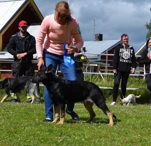 "SCANDINFVIAN SUMMER ""DOG SHOW СACIB CAC""  ""MOHOPORODNAY VEO""Чемпион Швеции Dsc_5616"
