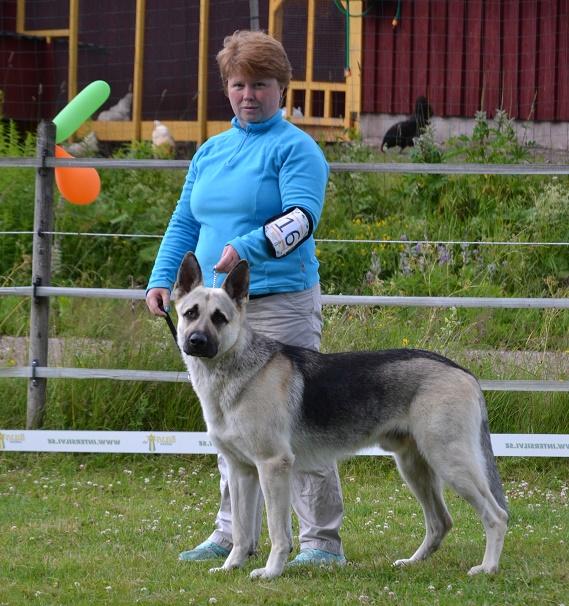 "SCANDINFVIAN SUMMER ""DOG SHOW СACIB CAC""  ""MOHOPORODNAY VEO""Чемпион Швеции Dsc_5618"