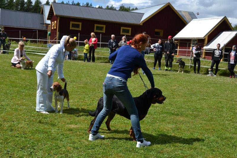 "SCANDINFVIAN SUMMER ""DOG SHOW СACIB CAC""  ""MOHOPORODNAY VEO""Чемпион Швеции Dsc_5717"