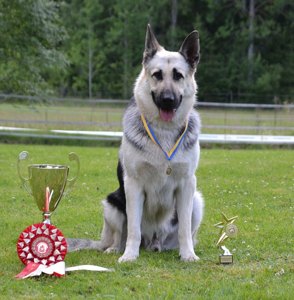 "SCANDINFVIAN SUMMER ""DOG SHOW СACIB CAC""  ""MOHOPORODNAY VEO""Чемпион Швеции Dsc_5810"