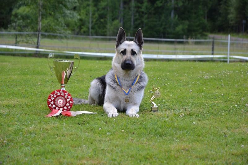"SCANDINFVIAN SUMMER ""DOG SHOW СACIB CAC""  ""MOHOPORODNAY VEO""Чемпион Швеции Dsc_5812"