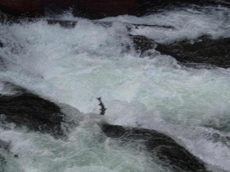 Alaska: Péninsule de Kenaï Dsc05821