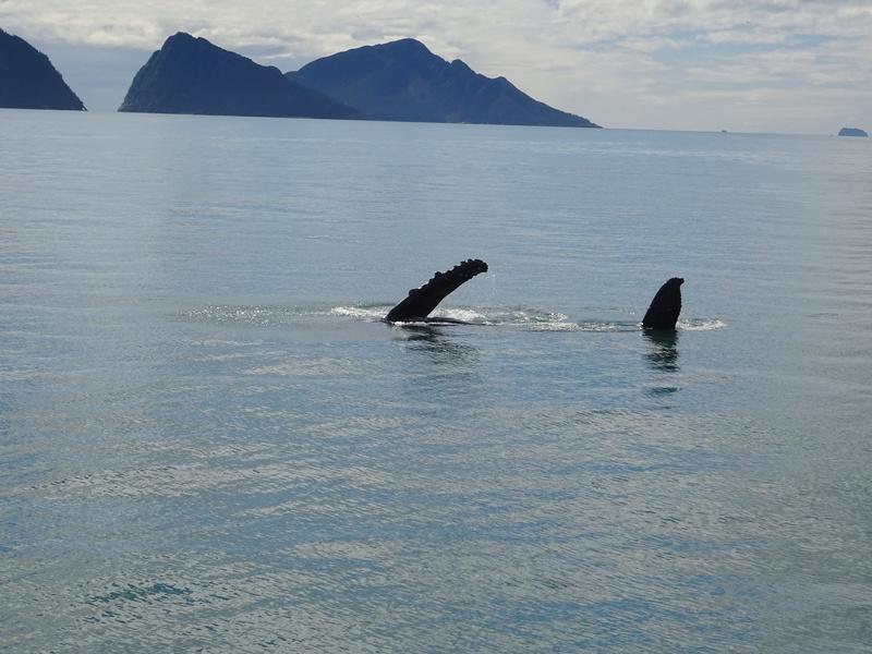 Alaska: Seward Dsc06114