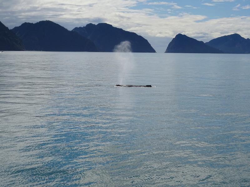 Alaska: Seward Dsc06116