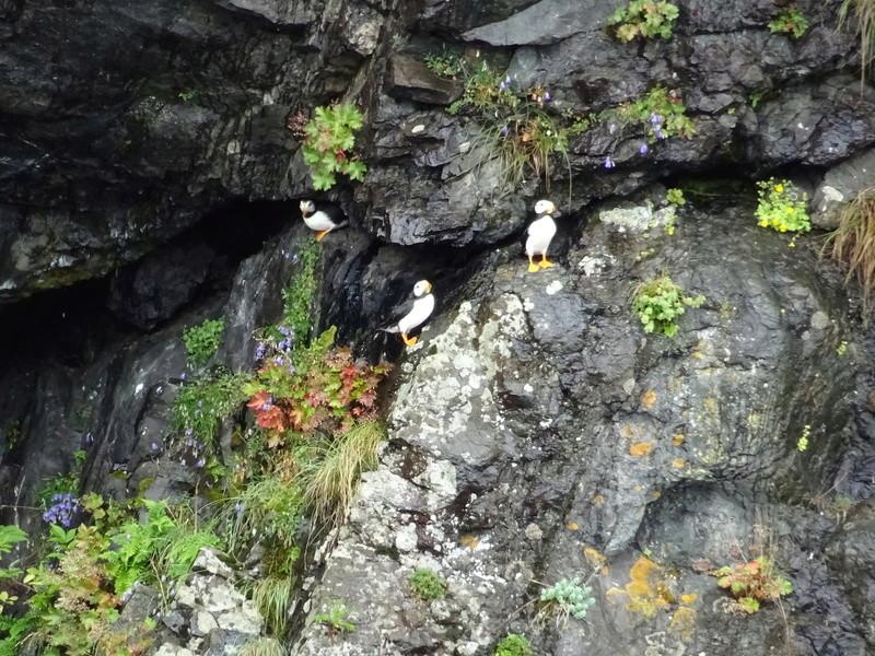 Alaska: Seward Dsc06313