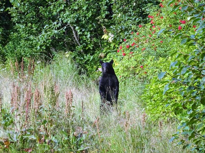 Alaska: Valdez ours et saumons Dsc06718